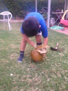 ココナッツ割りは大変なので最後はいつも飽きる長男。