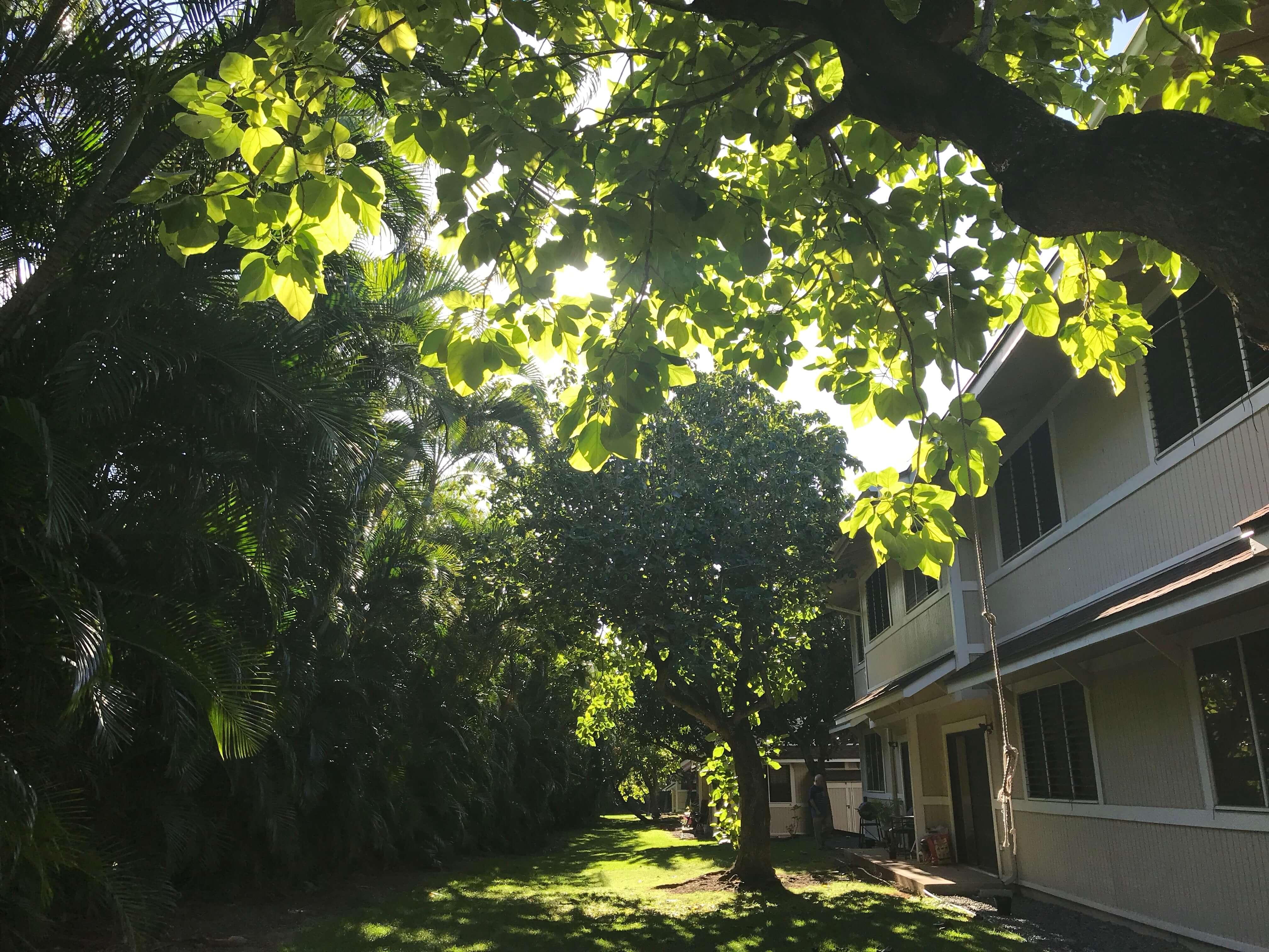 ハワイで大家:マノアのお友達の家