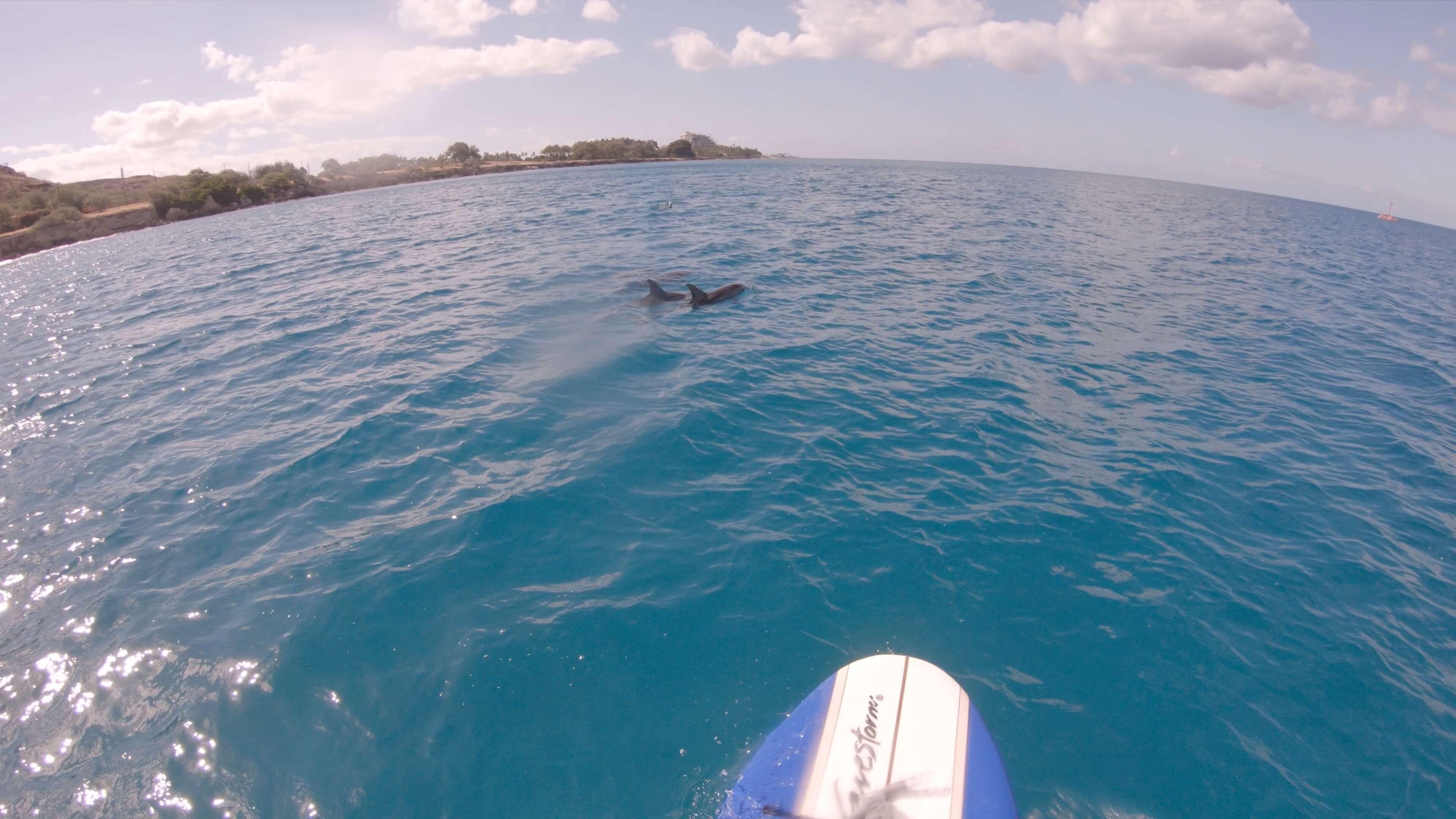 [ハワイ生活]大盛況! 天方エバンのSUPで行くドルフィンツアー
